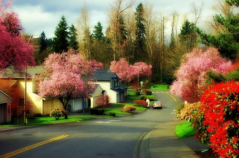 Comfort of home for your vacation! - Image 1 - Kirkland - rentals