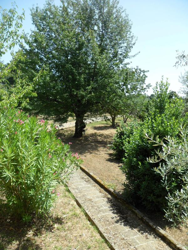 Peaceful house in the green at Canale Monterano (Rome) - Image 1 - Canale Monterano - rentals