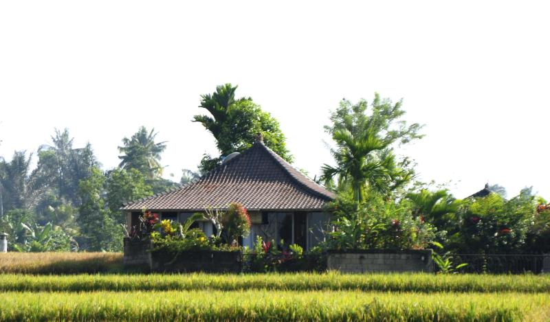 Jepun Cottage from the rice field - Jepun Cottage, Ubud - (pool, wifi, ricefield view) - Ubud - rentals