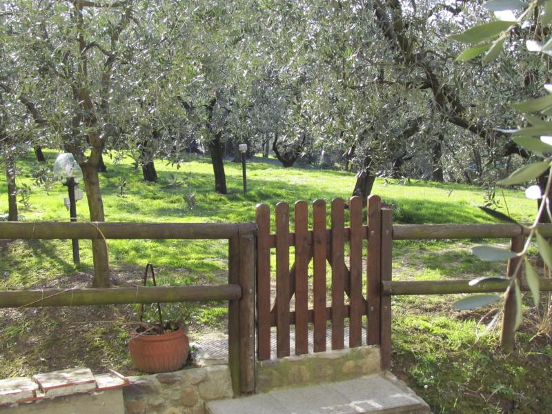 entrance to olive grove - The Vineyard - in the heart of the Lucca wine road - Florence - rentals