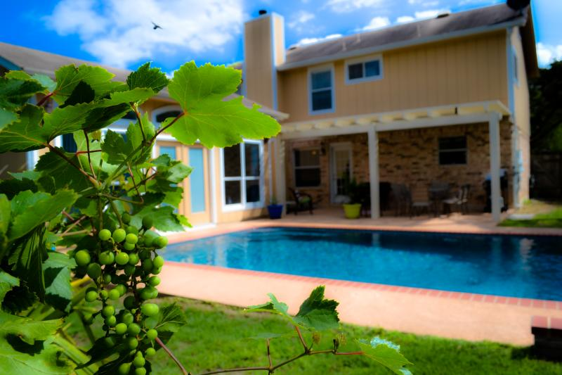 Our back yard area.  Yes, those are fresh grapes.  :) - San Antonio Pool Paradise, 4 Bedrooms, Guest House - San Antonio - rentals