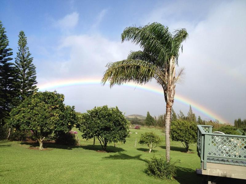 A front yard view - Always In Season - Hawi - rentals