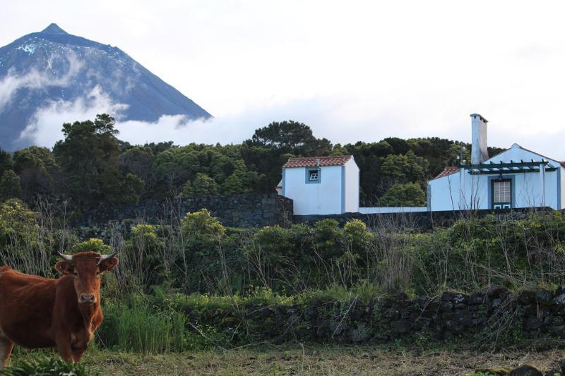 Casa do Paim- Cottage in Pico Island - Azores - Image 1 - Sao Roque do Pico - rentals