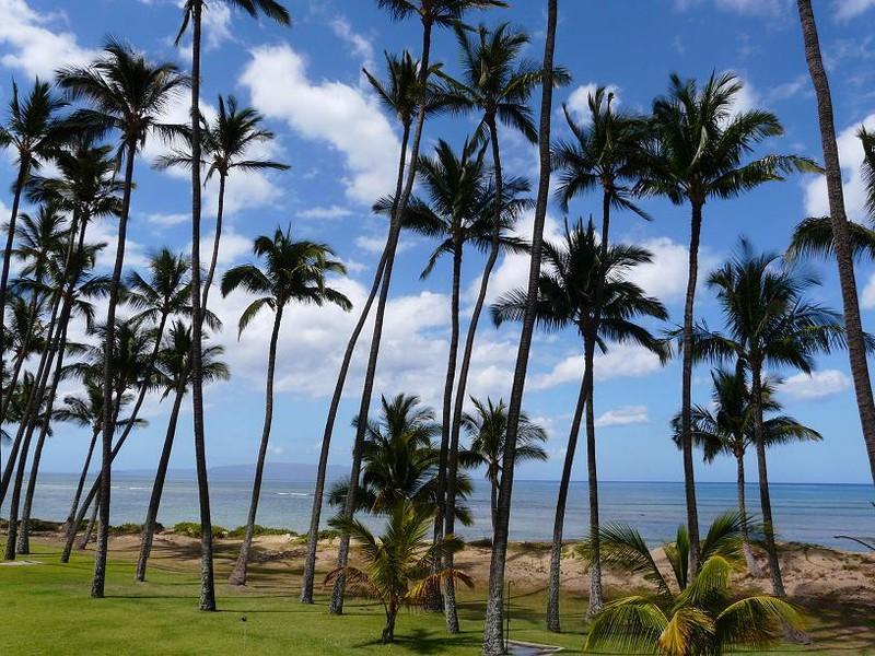Hale Kai O' Kihei 1 Bedroom Ocean View 108 - Hale Kai O' Kihei 1 Bedroom Ocean View 108 - Mauna Lani - rentals