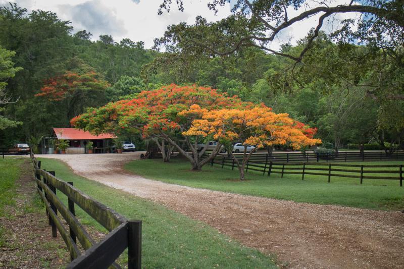 Arabian Farm Luxury Villas - Image 1 - Santa Isabel - rentals