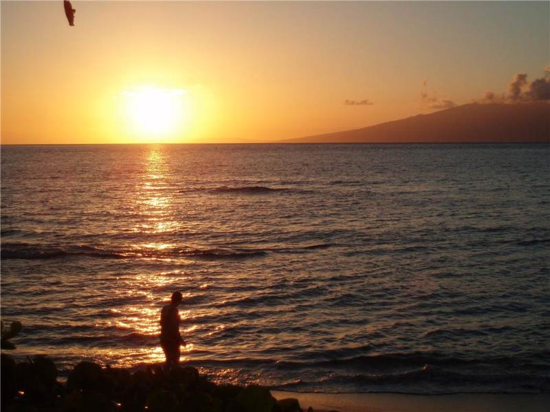 Kaanapali Shores #825 - Image 1 - Lahaina - rentals