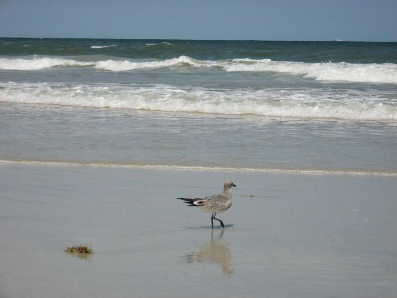 Listen....you can almost hear the surf.... - Spacious End Unit  Retreat Only Steps To The Beach - Ormond Beach - rentals