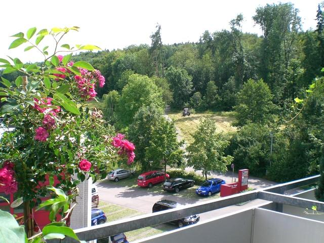 View to the Forrest in Summer. - Z - Thalwil - rentals