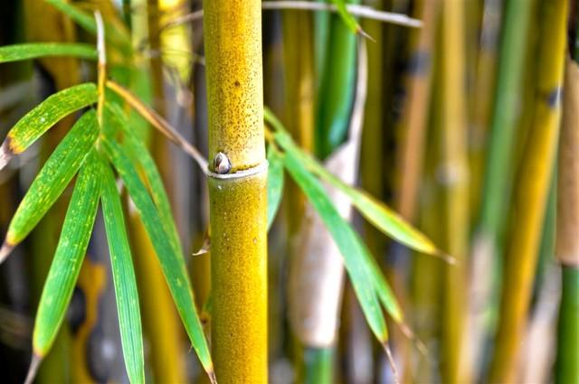 Bamboo in the back yard - No longer available - Bonita Springs - rentals