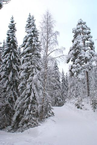 view in winter - Sofia Cottage - Halmeniemi - rentals