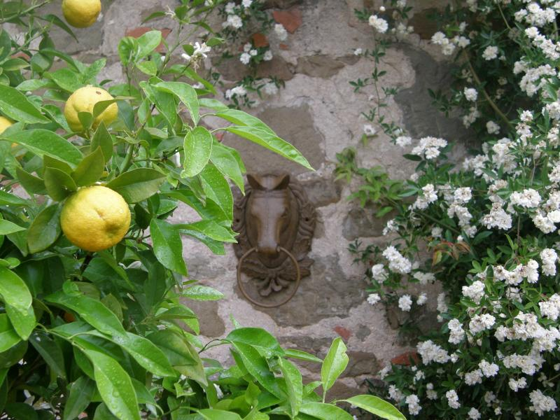 Horse Riding Holidays and Farmhouse in Tuscany - Image 1 - Castelnuovo Berardenga - rentals