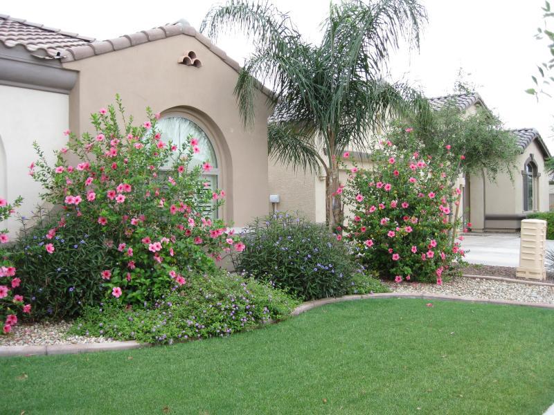 Frontyard - SUNDANCE VILLA - Litchfield Park - rentals