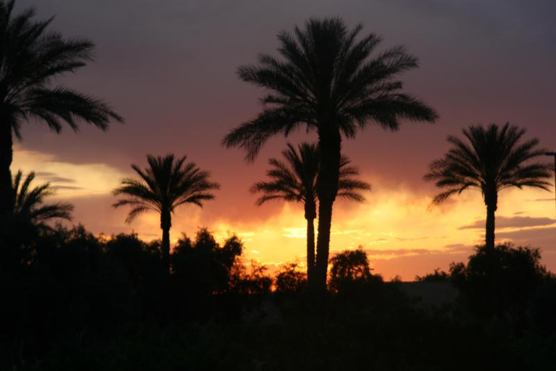 Arizona Palm Tree Sunset! - WOW...3  HEATED Pools/Spas Golf Comm MTNS + Sun! - Queen Creek - rentals