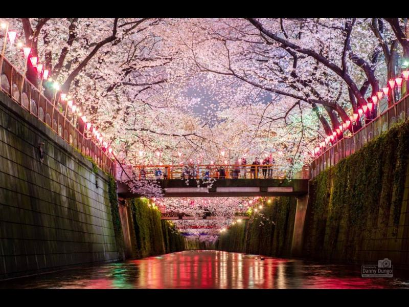 Cherry Blossoms Amazing - BEST DEAL!  in TOKYO Awesome 3Bedroom HOUSE!! - Tokyo - rentals