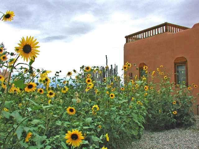 Bountiful autumn sunflowers introducing Casita Luminosa cabin - Casa Luminosa Casita Cabin - Taos - rentals