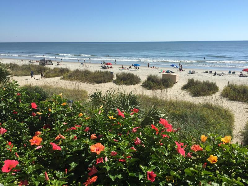 Compass Cove Oceanfront Studio in Amazing Location with Pool and Hot Tub - Image 1 - Myrtle Beach - rentals