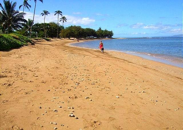 Menehune Shores #601 Ocean View 2bd 2bath Great Rates! - Image 1 - Kihei - rentals