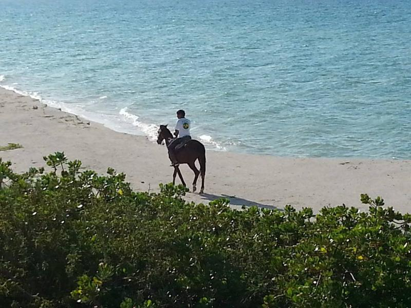 Horse back riding on the beach - Oceanfront 2/2 Pool A/C Internet Immaculate Gated - Chuburna - rentals
