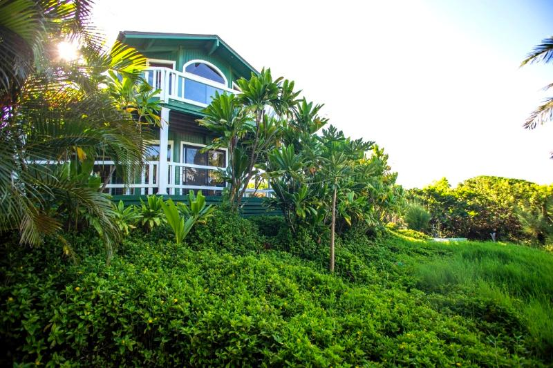 Late afternoon sun brings out our luscious greens - Huelo Pt Lookout House/Cottages - North Shore - Haiku - rentals