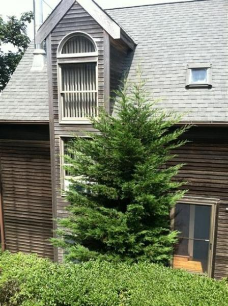 Exterior - Provincetown Vacation Rental (105243) - Provincetown - rentals