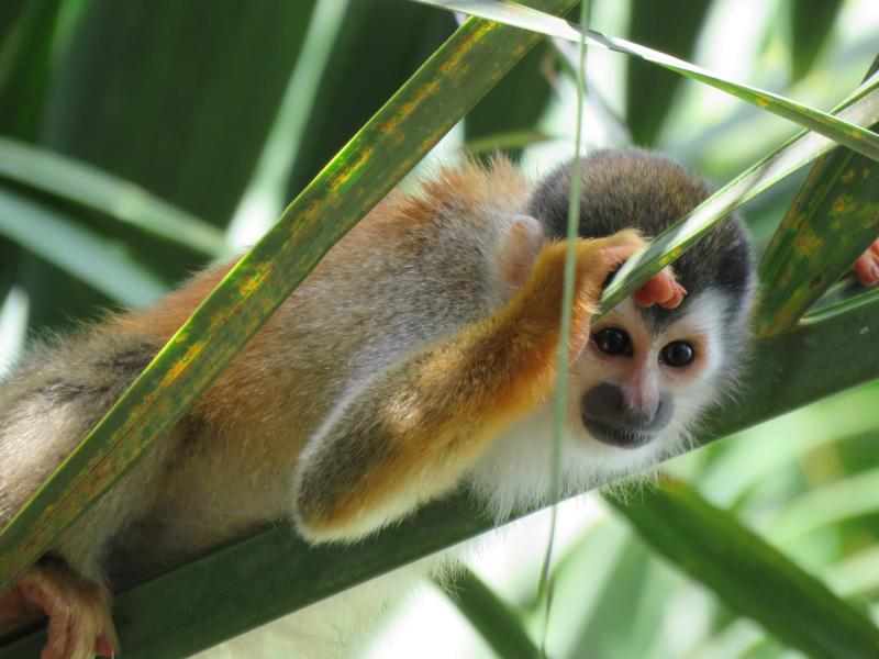 Titi monkey peeking in our window! - 2 Bedroom,pool, private deck, WiFi, BBQ,1000 sq/ft - Manuel Antonio National Park - rentals