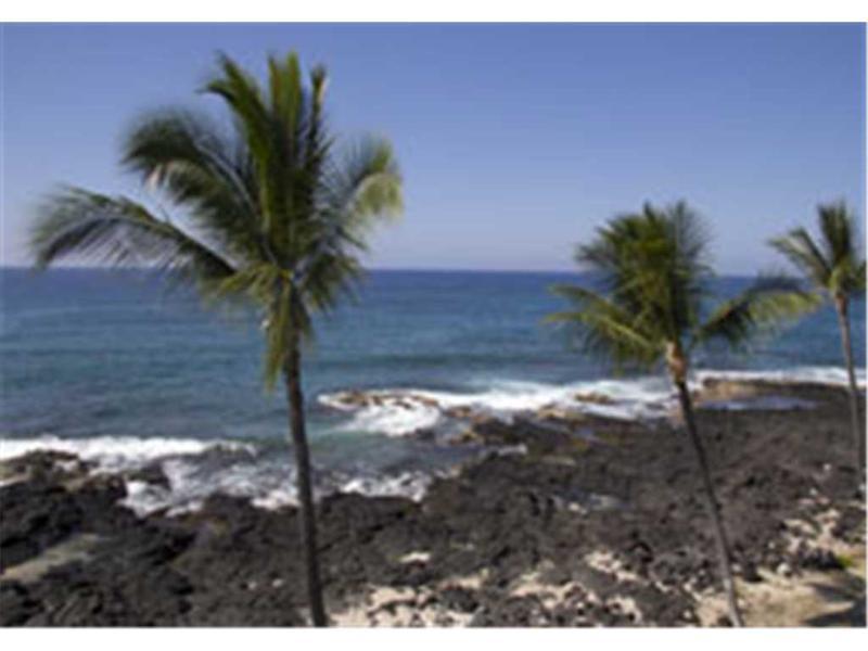 Kona Reef#D31 - Image 1 - Kailua-Kona - rentals