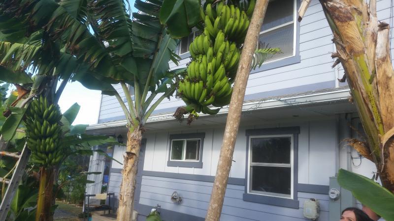 Banana Bungalow - Banana Bungalow 2 Bed Apt/ Sleeps 6 /Laie Hawaii - Laie - rentals