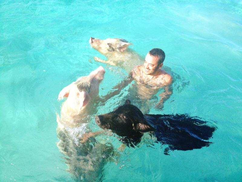 SWIM with the PIGS! - BREEZY HILL GUEST HOUSE and MAIN HOUSE - George Town - rentals