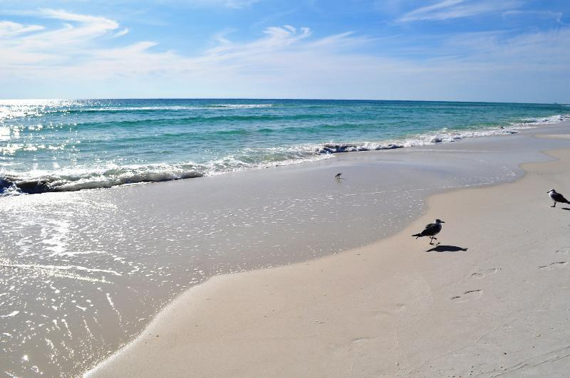 """Pelican Pointe Unit 1204"" Relax and Renew in this Gulf Front Retreat!!! - Image 1 - Orange Beach - rentals"