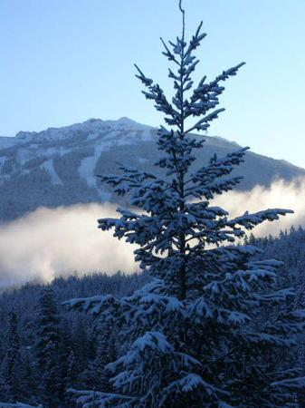 Spectacular view of Blackcomb Mountain from our Living Room Window. - David and Kathleen Tapping - Whistler - rentals