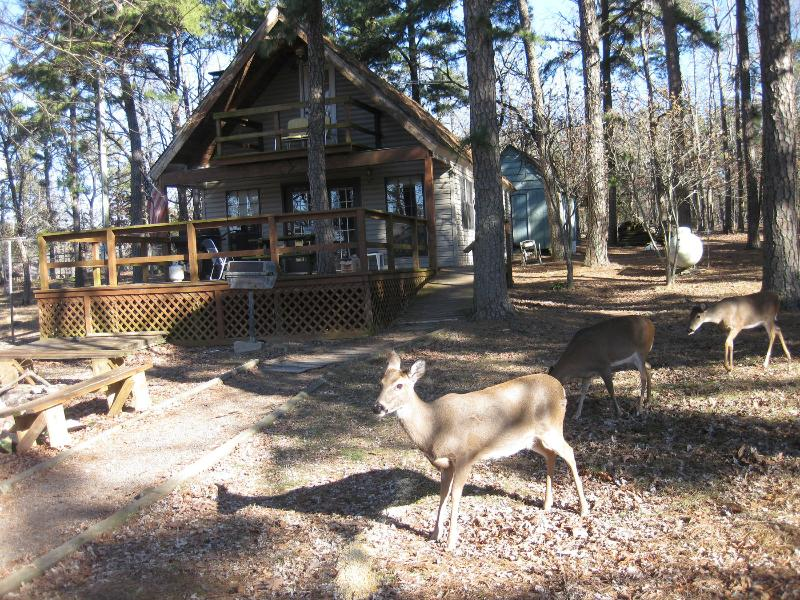 Regular visitors at the cabin - Mt Nebo State Park A-Frame Cabin on Top - Dardanelle - rentals