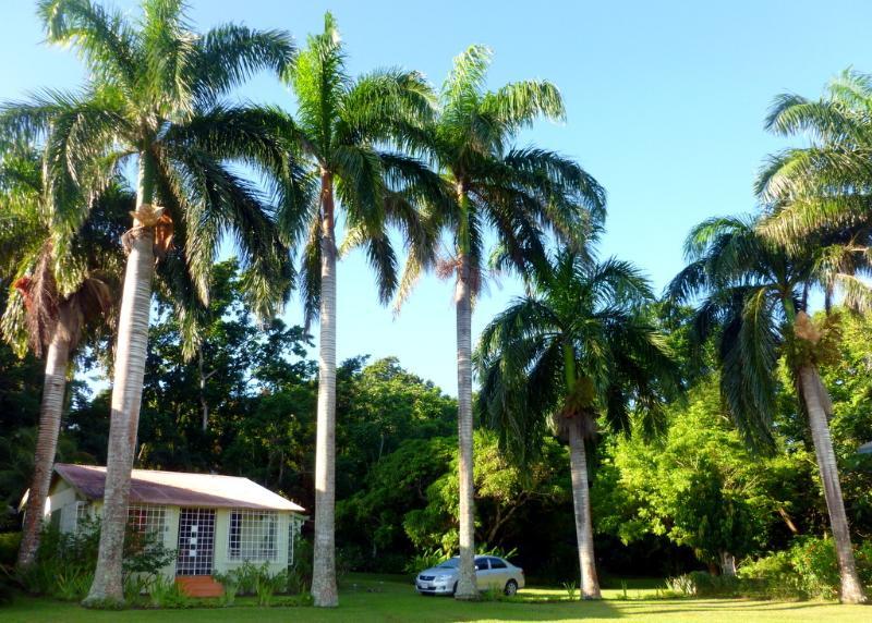 Fern Villa - walk to beach in 5 minutes - Image 1 - Boscobel - rentals