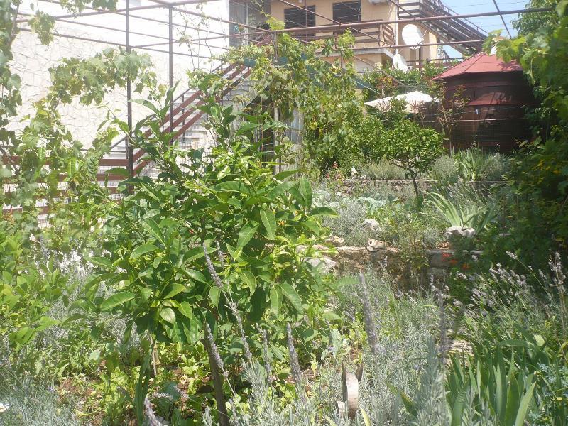 courtyard (house and surroundings) - 35393 Lovor (2) - Mali Losinj - Mali Losinj - rentals