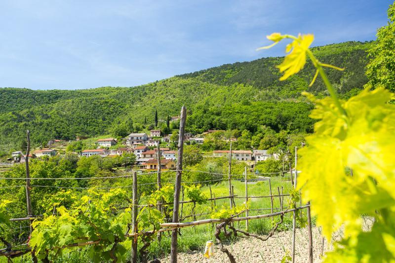 view (house and surroundings) - 5154  H(6) - Lovran - Lovran - rentals