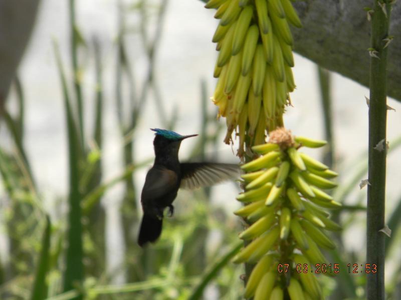 Hummingbird - Our Top Ten at  Orient Bay - Orient Bay - rentals