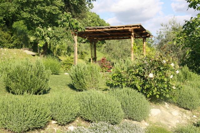 Borgo di Sopra, Tuscany - Image 1 - Pelago - rentals