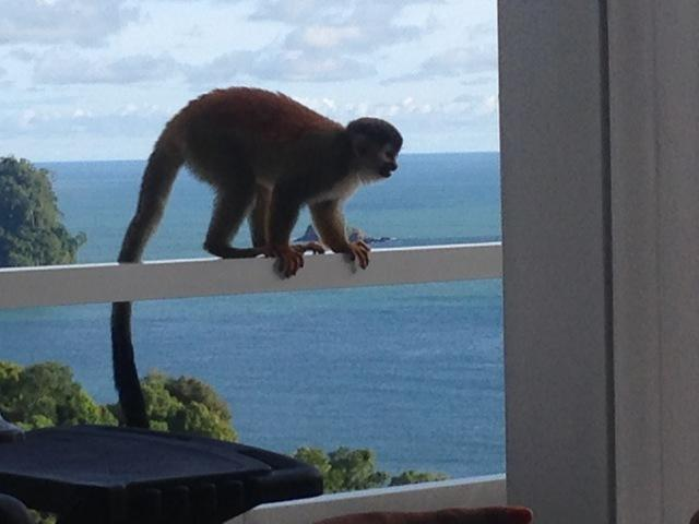 Stunning Villa, Ocean Views, Private Pool, Monkey Visitors Daily - Image 1 - Quepos - rentals