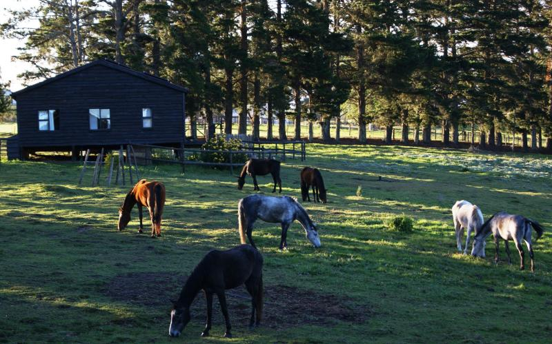 Free-roaming horses in front of Merlin's Cottage - Angels Rest Farm, peaceful self-catering cabin - Plettenberg Bay - rentals