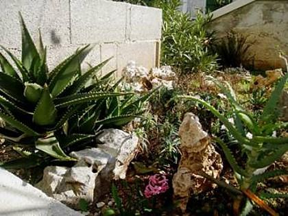 garden (house and surroundings) - 5169  A1(4+1) - Postira - Postira - rentals