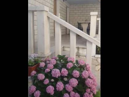 flowers - 5666  C(4) - Sveta Nedjelja - Sveta Nedjelja - rentals