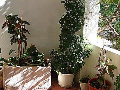 interior (house and surroundings) - 00513IGRA A2(2+2) - Igrane - Igrane - rentals