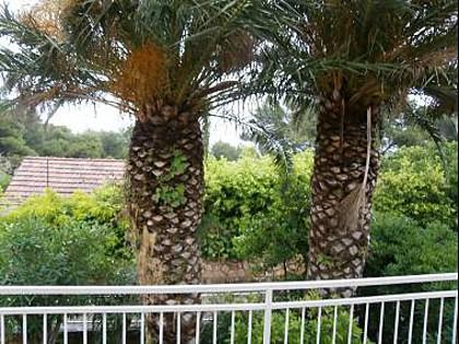 A2(2+2): terrace view - 4981  A2(2+2) - Jelsa - Jelsa - rentals