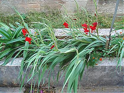 flowers - 01813MAKA A1(6+2) - Makarska - Makarska - rentals