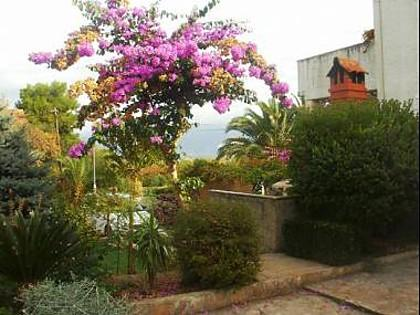 garden (house and surroundings) - 00401MIRC A1(4+1) - Mirca - Mirca - rentals
