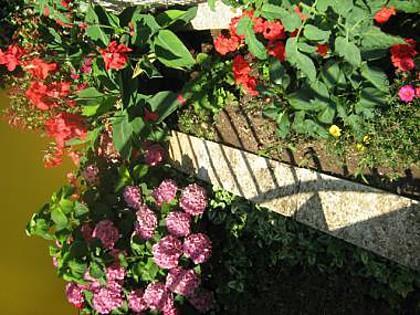 flowers - 00705PAKO A Srednji(3+1) - Pakostane - Pakostane - rentals