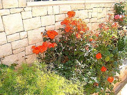 flourish plant (house and surroundings) - 03001SUPE  A3(2+1) - Supetar - Supetar - rentals