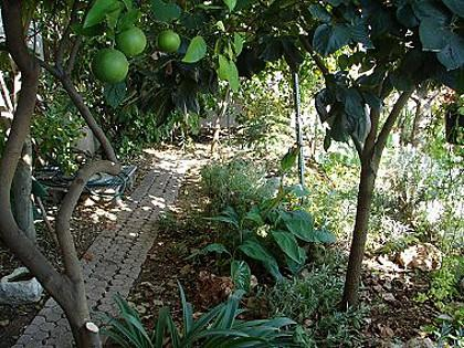 garden (house and surroundings) - 00107SEGD A1(4) - Seget Donji - Seget Donji - rentals