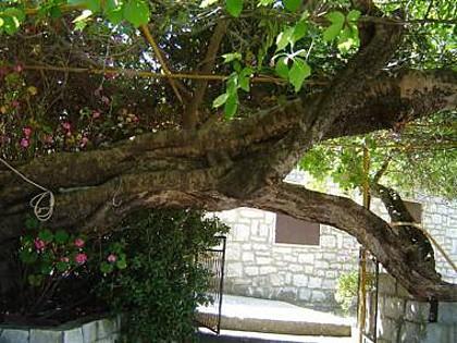 A2(2+2) Mali: greenery - 00104UVRO  A2(2+2) Mali - Cove Rogacic (Vis) - Cove Rogacic - rentals