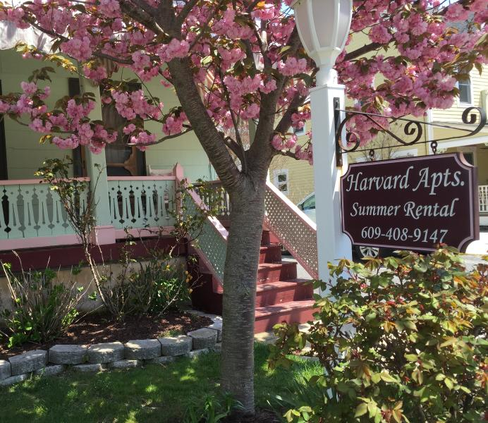 Harvard Apartments Cherry Blossom tree in bloom - Apt #3 - 4 bedroom - sleeps 10 - 2 blocks to beach - Cape May - rentals
