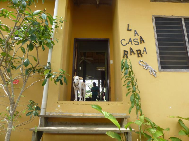 Dog not included - La Casa Rara-Tropical Paradise, Best Deal/Location - West End - rentals